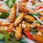 Peut-on vraiment manger des insectes?